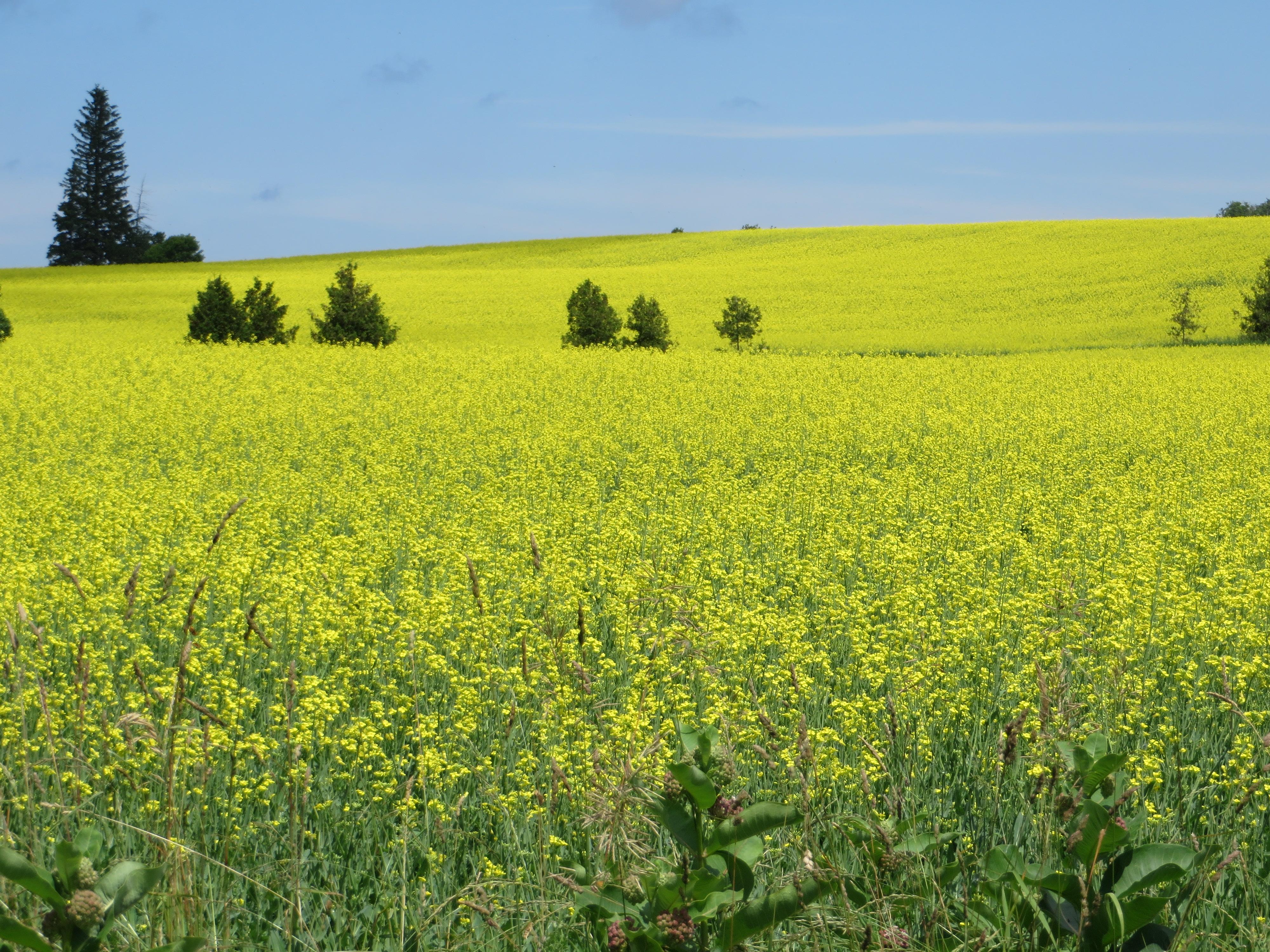 Field near Didsbury, AB