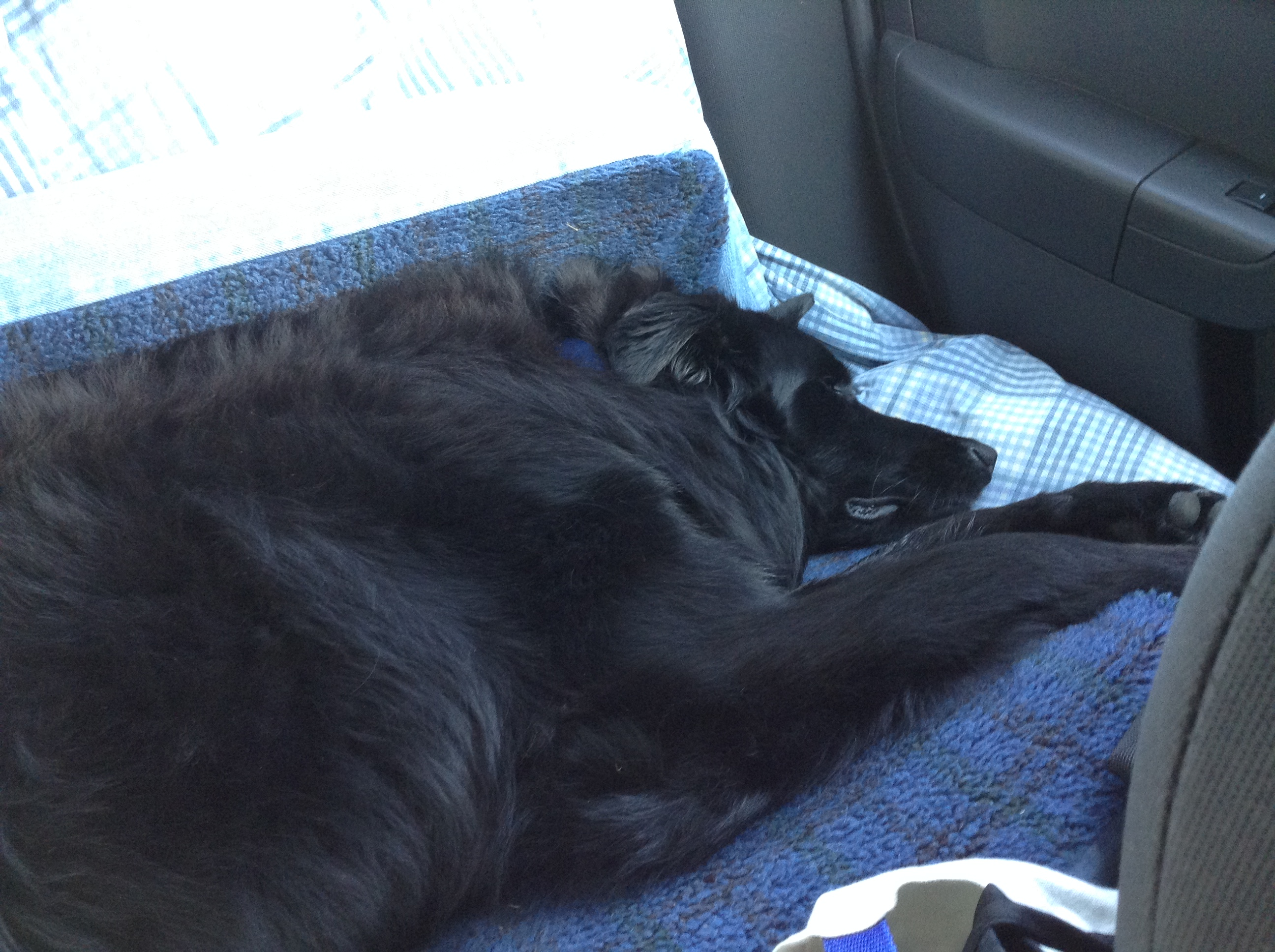 Bear in his Air Conditioned Comfort!
