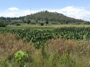 Cactus Plant Farm.