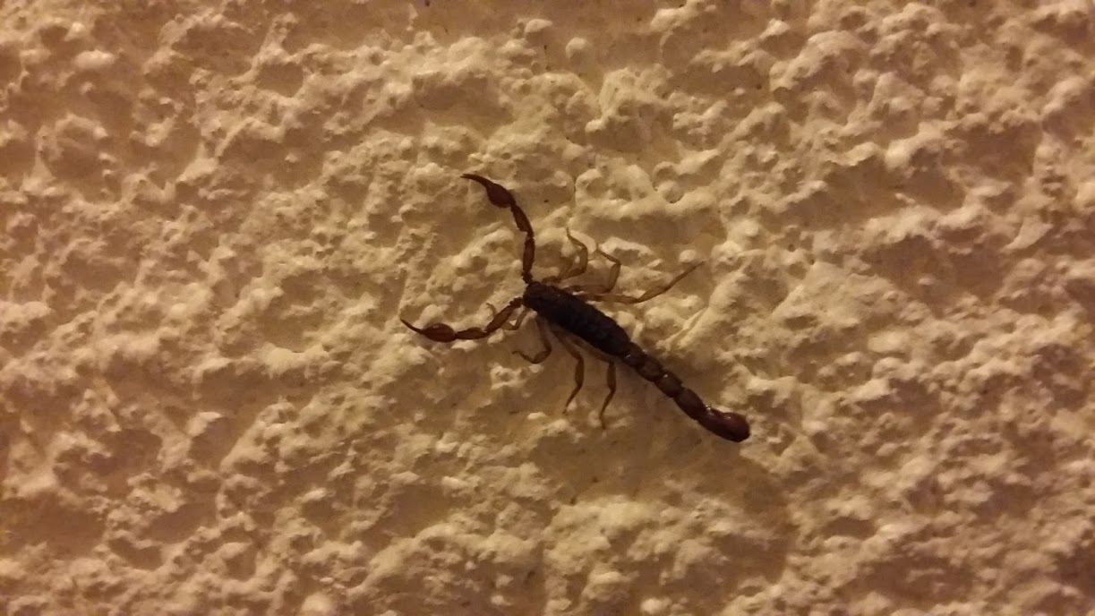 Scorpion on the wall where we stayed in Mexico City - Yikes!