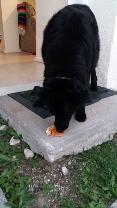 Bear enjoy some pizza too!