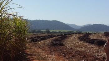Sugarcane Harvest season