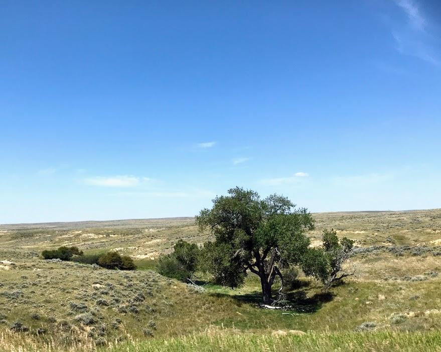 Flat terrain, but a few trees.